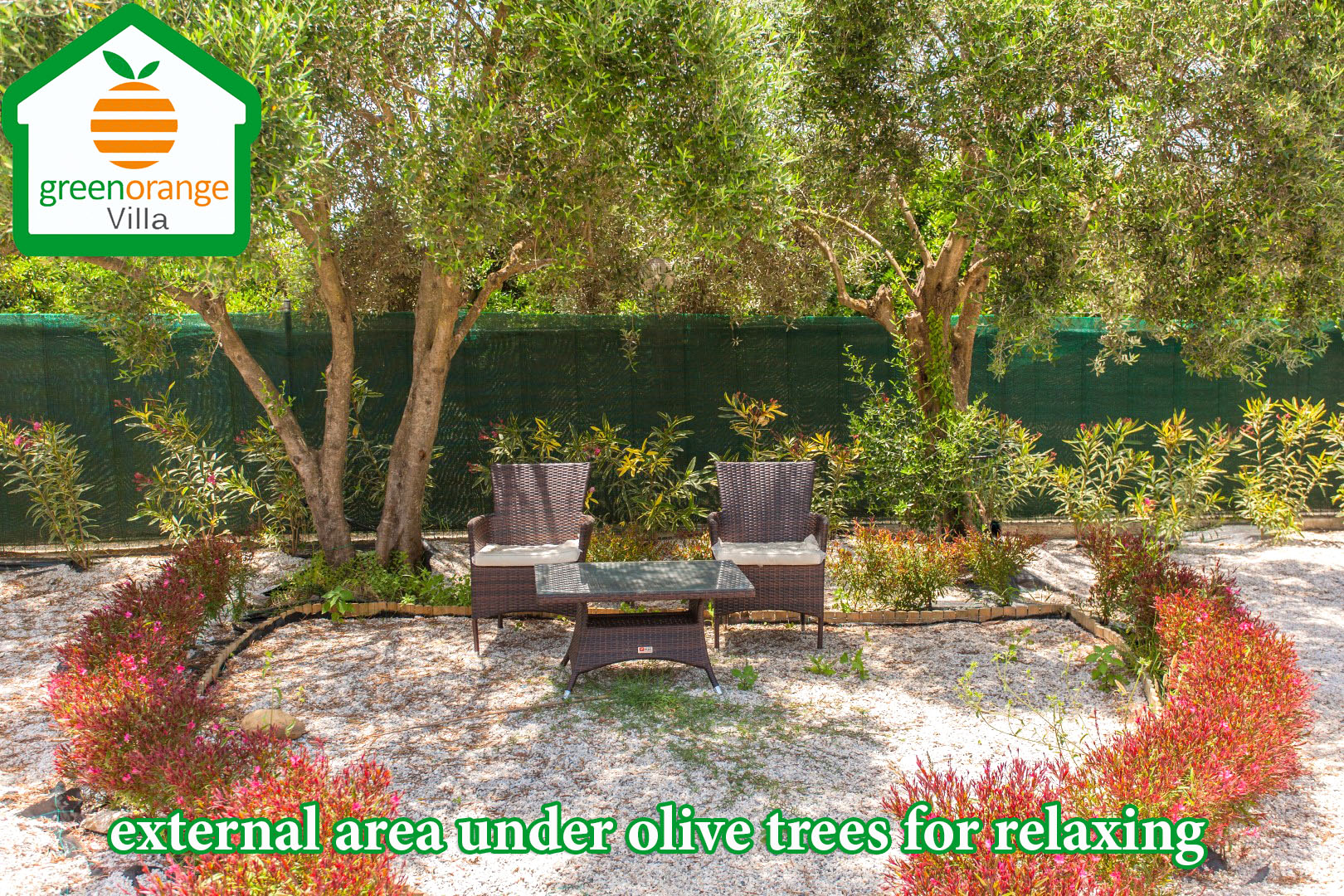 external-area-under-olive-tree-green-orange-villa