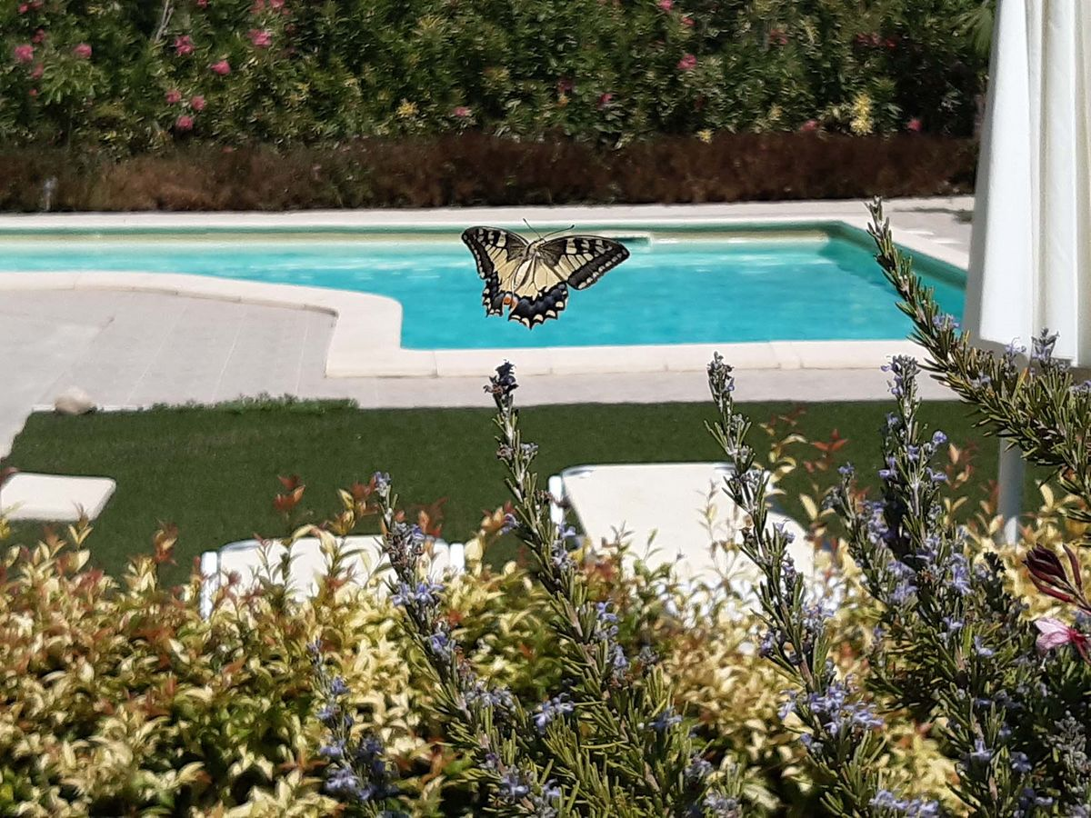 chania-crete-organic-farm-villa-green-orange-villa safe-holidays-greece