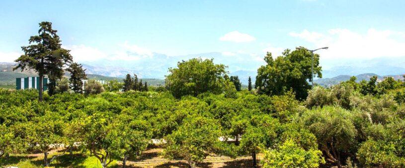 holiday-homes-chania-apartment2_02-green-orange-villa-organic-farm safe-holidays-greece